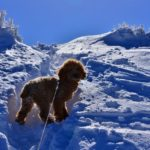 犬と一緒に登山するのは禁止すべき~あなたはどっち派?賛否両論の意見あり